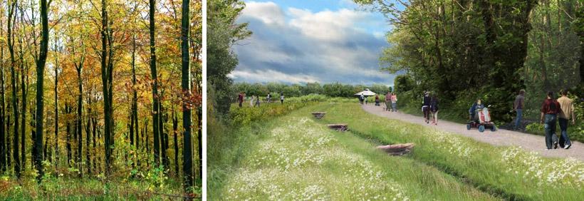 York Community Woodland concept designs
